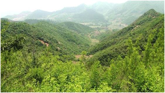 贝博竞彩为黑龙江森林防火提供数字超短波通信解决方案