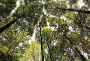 林业公安/防火新万博网页端通信系统