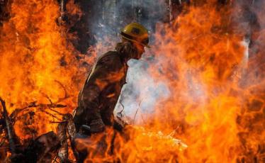 """""""野火烧不尽,春风吹又生"""",森林火灾从何防起?"""